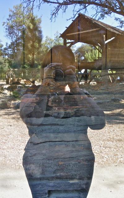 Wood Reflection